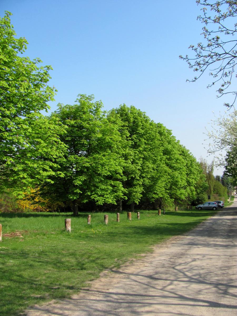 Entdeckt die Natur direkt vor eurer Haustür und fahrt nicht erst mit dem Auto 50 Kilometer in das nächste Naherholungsgebiet.